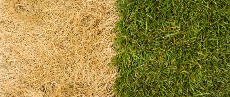 Has your lawn dried out following the recent heatwave?